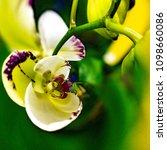 creative orchid flowers design...   Shutterstock . vector #1098660086