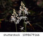Small photo of Wayward forest wild flowers