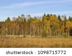 Small photo of Moor, moor landscape with birches in front of spruces in autumn in front of a blue sky