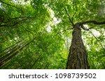 trees in a new berlin wisconsin ... | Shutterstock . vector #1098739502