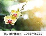 orchid flower in garden close...   Shutterstock . vector #1098746132