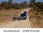 kruger national park  south... | Shutterstock . vector #1098761426