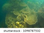 beautiful coral in the sea  at... | Shutterstock . vector #1098787532