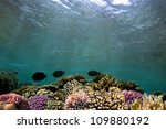 ocean underwater background... | Shutterstock . vector #109880192