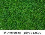 long not cutted lawn texture....   Shutterstock . vector #1098912602