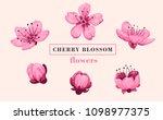 sakura flower set. sakura... | Shutterstock .eps vector #1098977375