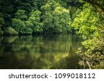 river clyde and the forest ... | Shutterstock . vector #1099018112