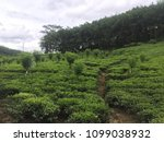 creative tea estate background | Shutterstock . vector #1099038932