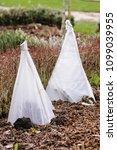 fleeces protect tender plants... | Shutterstock . vector #1099039955