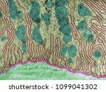 false colour transmission...   Shutterstock . vector #1099041302