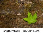 single green leaf on a decaying ... | Shutterstock . vector #1099041626