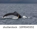 humpback whale showing its tail ... | Shutterstock . vector #1099045352