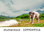 elephant in the forest  river... | Shutterstock . vector #1099049516