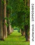 beautiful tree alley in the... | Shutterstock . vector #1099054892