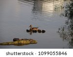 mommy duck and ducklings | Shutterstock . vector #1099055846
