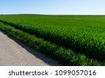 rural vivid landscape. field... | Shutterstock . vector #1099057016