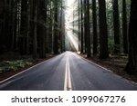 california redwoods road | Shutterstock . vector #1099067276