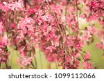 many beautiful ancestral... | Shutterstock . vector #1099112066