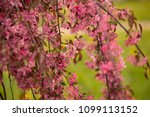 many beautiful ancestral... | Shutterstock . vector #1099113152