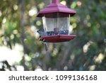 chickadee titmouse songbird... | Shutterstock . vector #1099136168