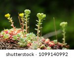 cool plant in the woods.   Shutterstock . vector #1099140992