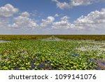 florida wetland in the...   Shutterstock . vector #1099141076