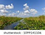 florida wetland in the...   Shutterstock . vector #1099141106