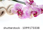 spa concept. orchid pink... | Shutterstock . vector #1099173338
