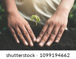 human hand planting little... | Shutterstock . vector #1099194662