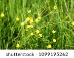 close up of a little yellow... | Shutterstock . vector #1099195262