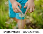 little boy hands touching a... | Shutterstock . vector #1099236908