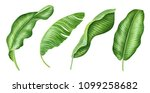 realistic tropical botanical... | Shutterstock . vector #1099258682
