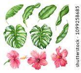 realistic tropical botanical... | Shutterstock . vector #1099258685