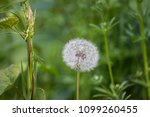 an intimate close up scene in... | Shutterstock . vector #1099260455