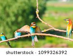 colony of beautiful birds in... | Shutterstock . vector #1099326392