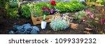 gardening. crate full of... | Shutterstock . vector #1099339232