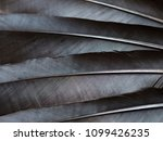 black raven feathers close up | Shutterstock . vector #1099426235