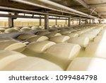 salting parmesan cheese | Shutterstock . vector #1099484798