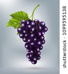 purple table grapes  wine... | Shutterstock .eps vector #1099595138