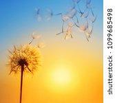 Silhouette Of Dandelion Agains...