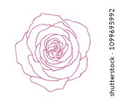 linear graphic art of rose... | Shutterstock .eps vector #1099695992