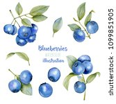 watercolor blueberries... | Shutterstock . vector #1099851905