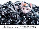 kitten redhead entangled in a... | Shutterstock . vector #1099852745