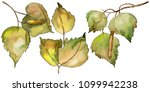 leaves birch in a watercolor... | Shutterstock . vector #1099942238