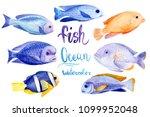 marine life  colored fish ... | Shutterstock . vector #1099952048