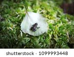a tiny frog on a leaf | Shutterstock . vector #1099993448