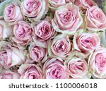 Stock photo close up pink bouquet rose 1100006018