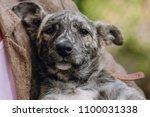 people holding sad cute little... | Shutterstock . vector #1100031338