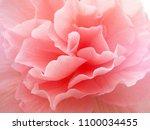 Flower Pink Color Close Up....
