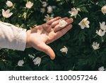 the beautiful  girl keeps a... | Shutterstock . vector #1100057246